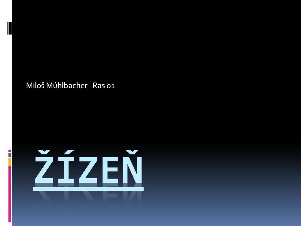 Miloš Múhlbacher Ras 01