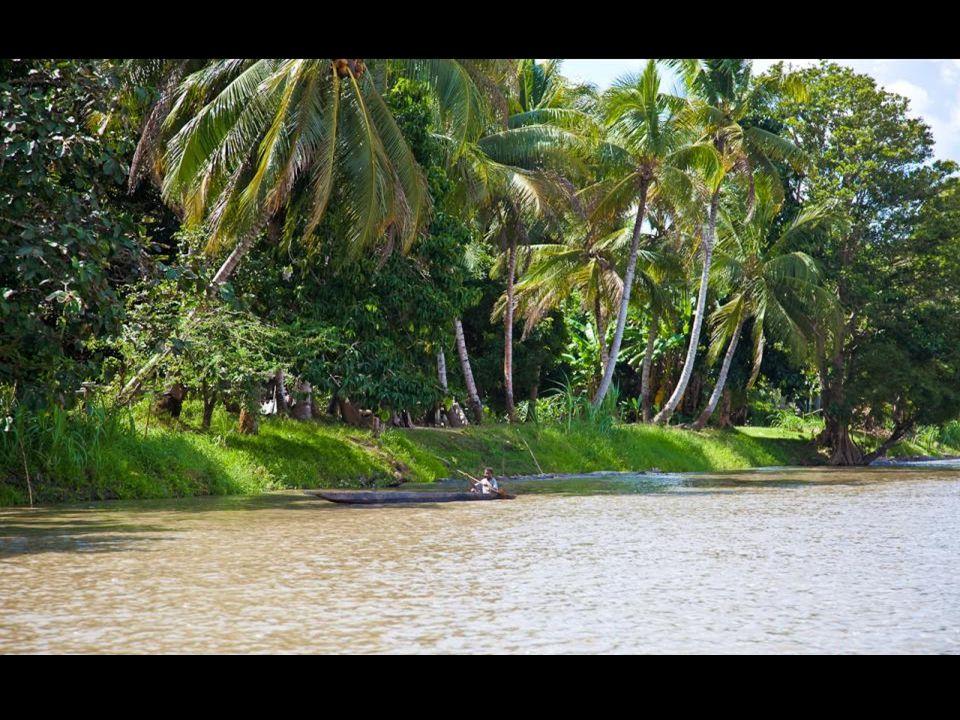 Téměř 70% území pokrývají neprostupné, bažinaté, deštné tropické pralesy. Najdeme zde i množství masožravých rostlin