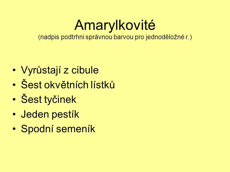 Amarylkovité (nadpis podtrhni správnou barvou pro jednoděložné r.) Vyrůstají z cibule Šest okvětních lístků Šest tyčinek Jeden pestík Spodní semeník