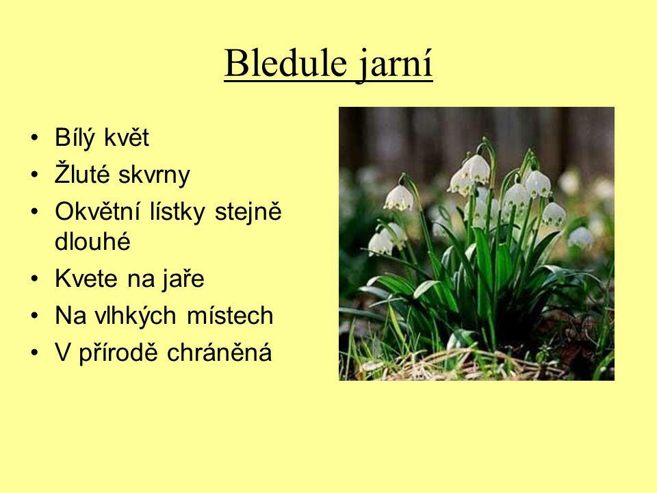 Bledule jarní Bílý květ Žluté skvrny Okvětní lístky stejně dlouhé Kvete na jaře Na vlhkých místech V přírodě chráněná