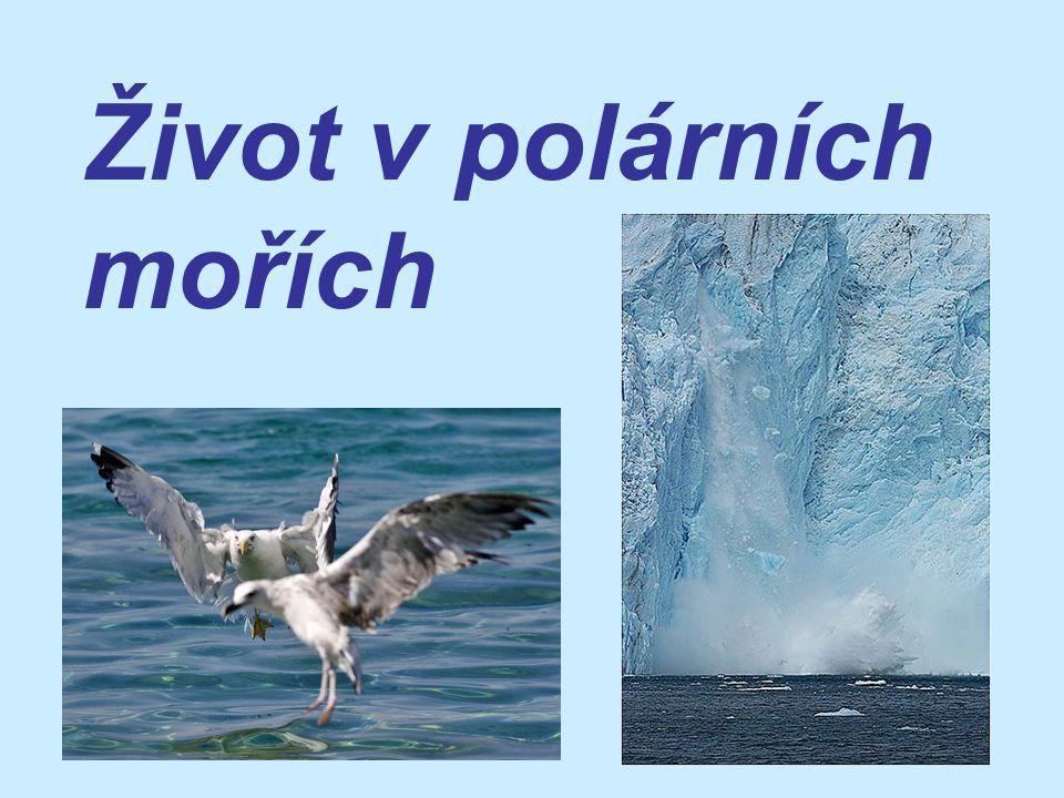 -rozsáhlá oblast hladiny Severního ledového oceánu je po většinu roku pokryta souvislým ledem nebo navršenými ledovými krami s rozsáhlými ledovými poli -léto je krátké, světlé a studené (nejtepleji je v červenci) -zima je dlouhá, temná a drsná
