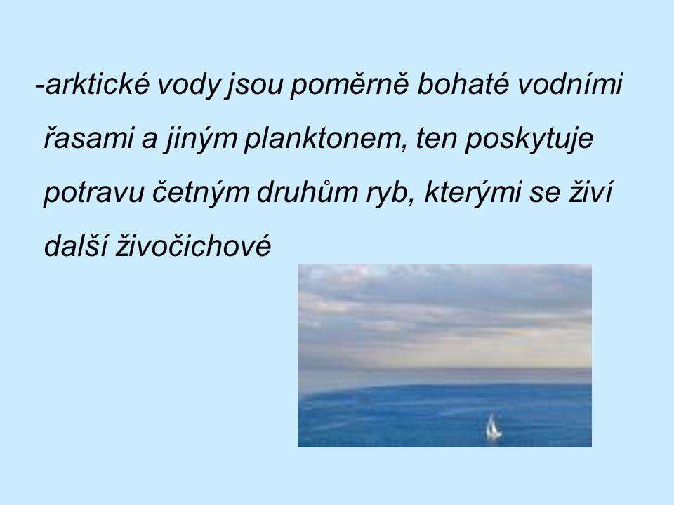 -arktické vody jsou poměrně bohaté vodními řasami a jiným planktonem, ten poskytuje potravu četným druhům ryb, kterými se živí další živočichové