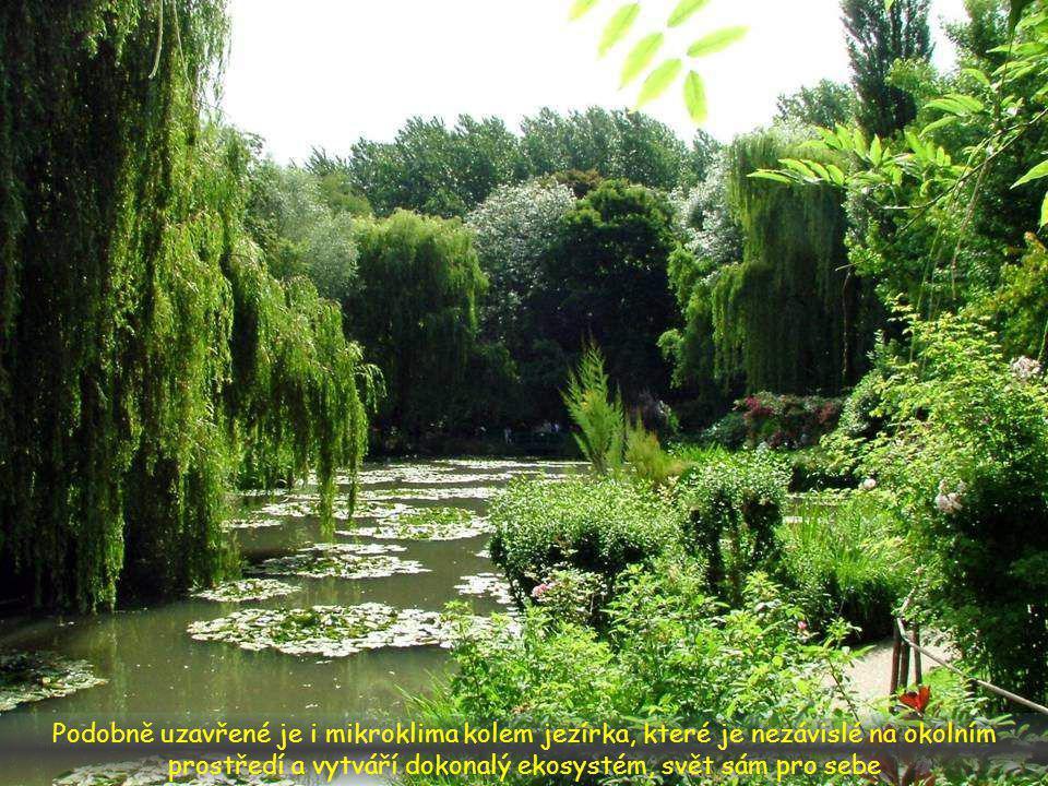 Ve vodě plují lekníny a odráží se v ní zelená vegetace, takže vzniká jakýsi uzavřený svět vodních zrcadel