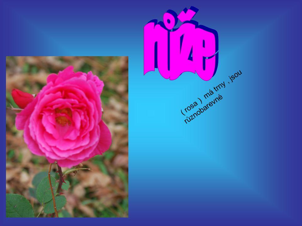 ( rosa ) má trny, jsou různobarevné