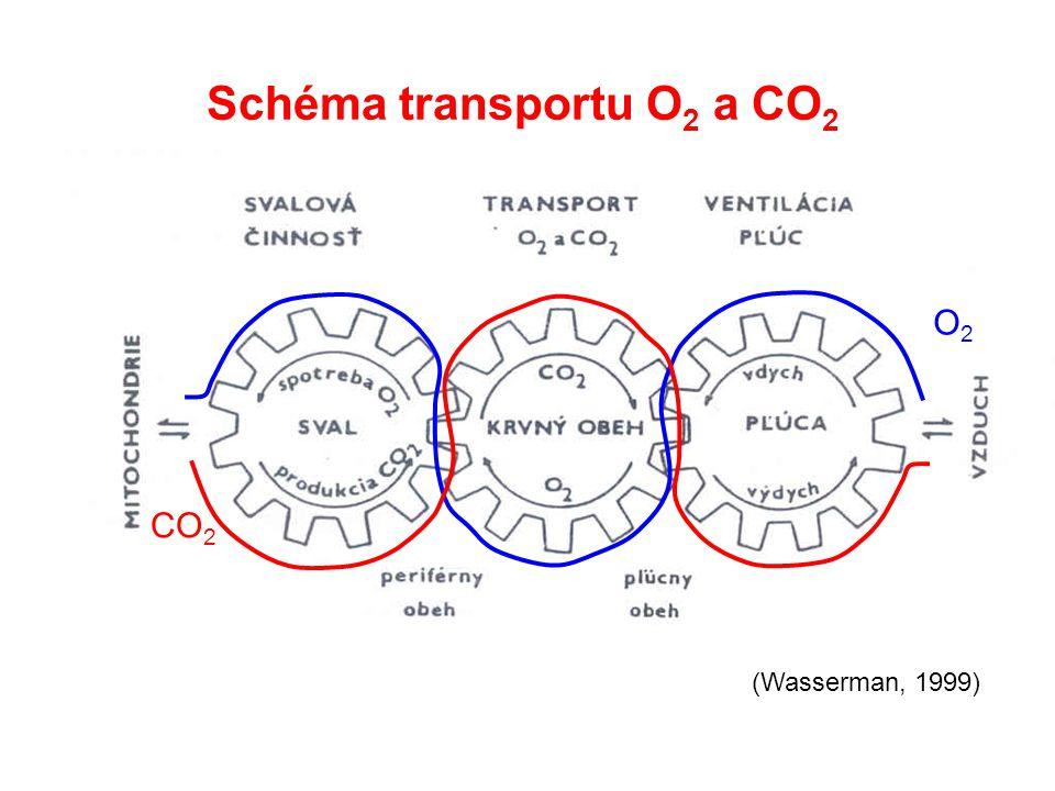 Schéma transportu O 2 a CO 2 O2O2 CO 2 (Wasserman, 1999)