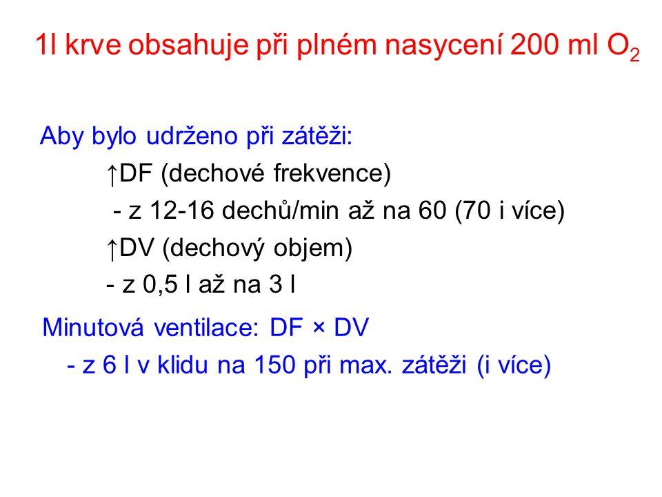 1l krve obsahuje při plném nasycení 200 ml O 2 Aby bylo udrženo při zátěži: ↑DF (dechové frekvence) - z 12-16 dechů/min až na 60 (70 i více) ↑DV (dechový objem) -z 0,5 l až na 3 l Minutová ventilace: DF × DV - z 6 l v klidu na 150 při max.