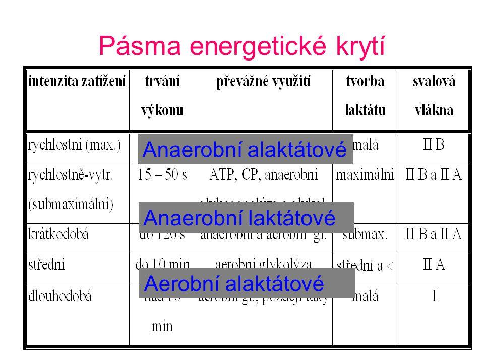 Pásma energetické krytí Anaerobní alaktátové Anaerobní laktátové Aerobní alaktátové