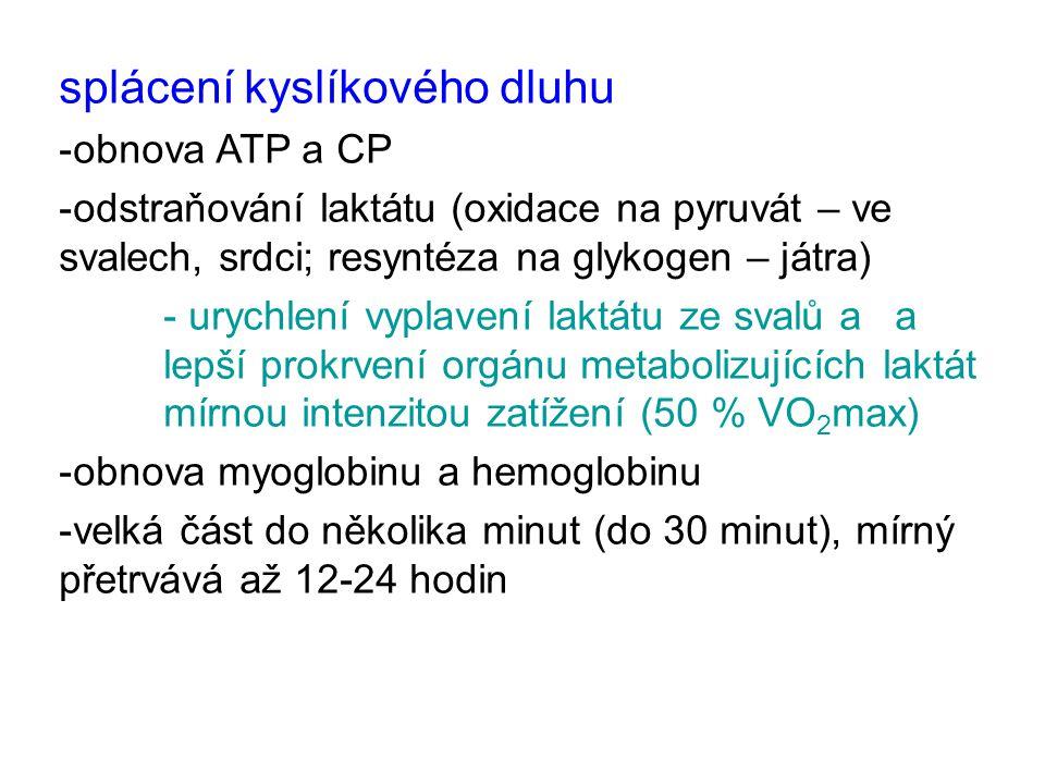 splácení kyslíkového dluhu -obnova ATP a CP -odstraňování laktátu (oxidace na pyruvát – ve svalech, srdci; resyntéza na glykogen – játra) - urychlení vyplavení laktátu ze svalů a a lepší prokrvení orgánu metabolizujících laktát mírnou intenzitou zatížení (50 % VO 2 max) -obnova myoglobinu a hemoglobinu -velká část do několika minut (do 30 minut), mírný přetrvává až 12-24 hodin