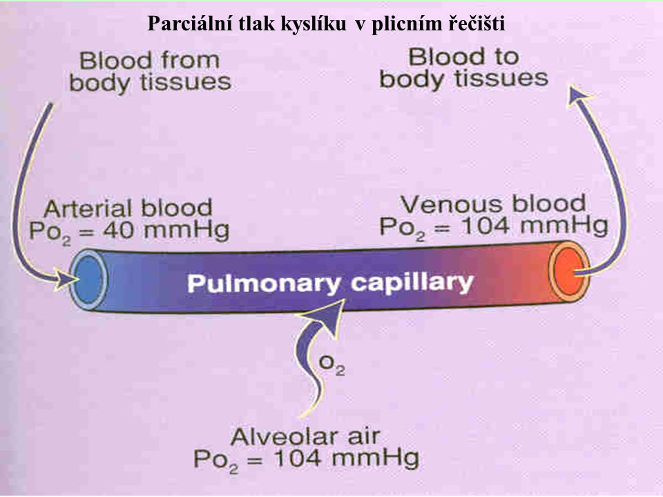  Podráždění napínacích receptorů v plicích zkrátí respiraci (prevence přeplnění plic vzduchem).