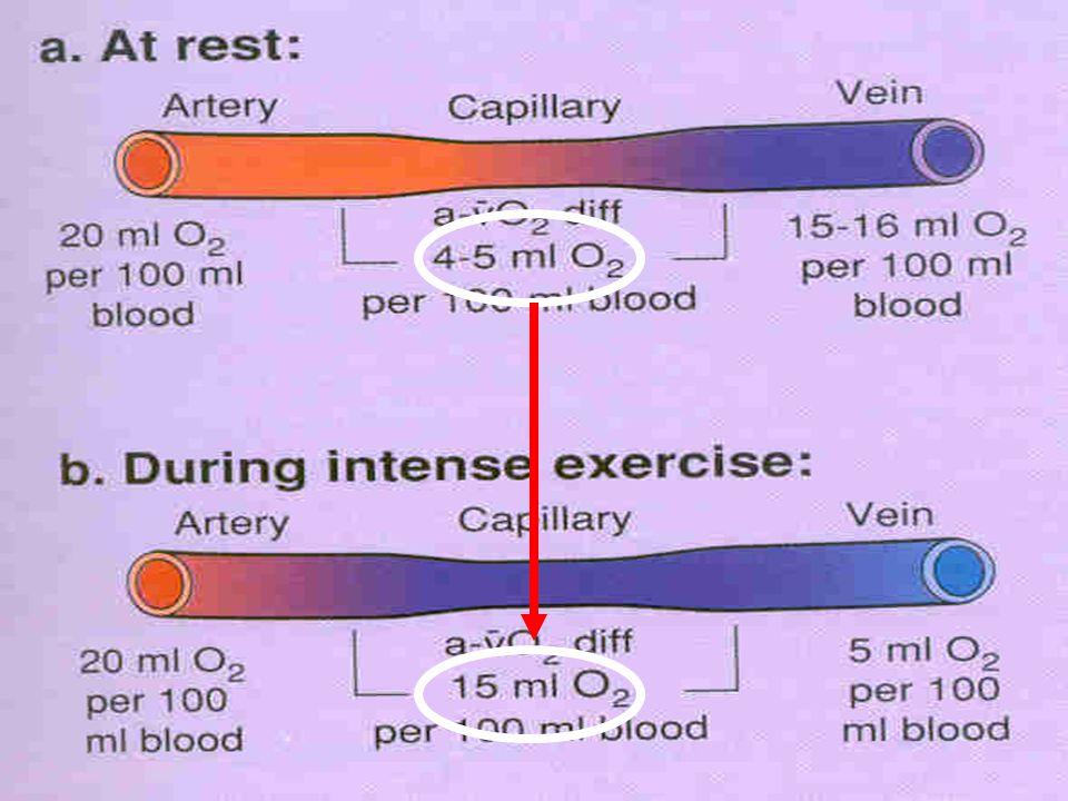 Víc než 15% celkové spotřeby kyslíku během těžké práce se může spotřebovat v respiračních svalech!