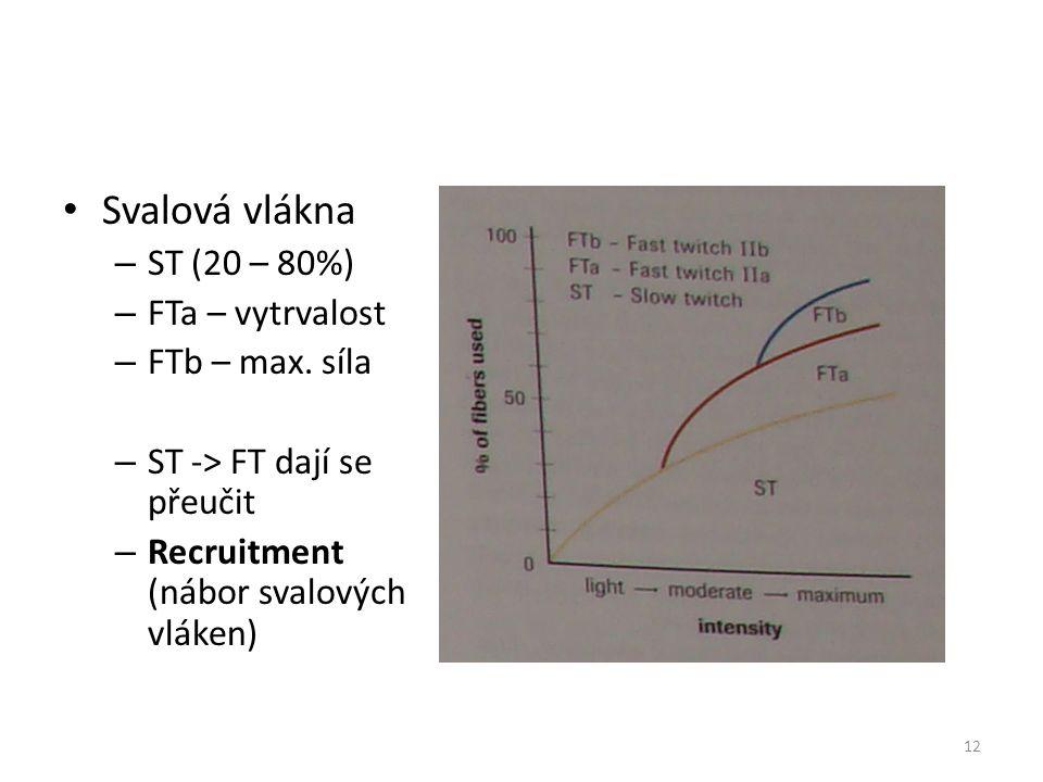 Svalová vlákna – ST (20 – 80%) – FTa – vytrvalost – FTb – max. síla – ST -> FT dají se přeučit – Recruitment (nábor svalových vláken) 12