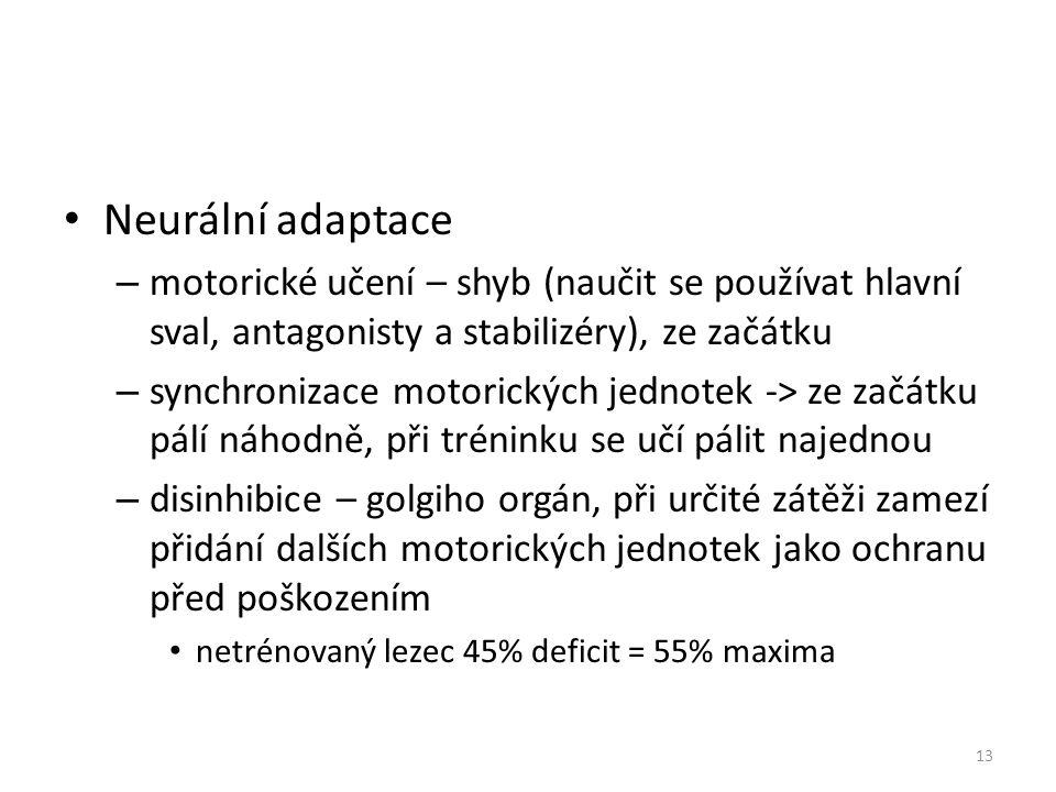 Neurální adaptace – motorické učení – shyb (naučit se používat hlavní sval, antagonisty a stabilizéry), ze začátku – synchronizace motorických jednotek -> ze začátku pálí náhodně, při tréninku se učí pálit najednou – disinhibice – golgiho orgán, při určité zátěži zamezí přidání dalších motorických jednotek jako ochranu před poškozením netrénovaný lezec 45% deficit = 55% maxima 13