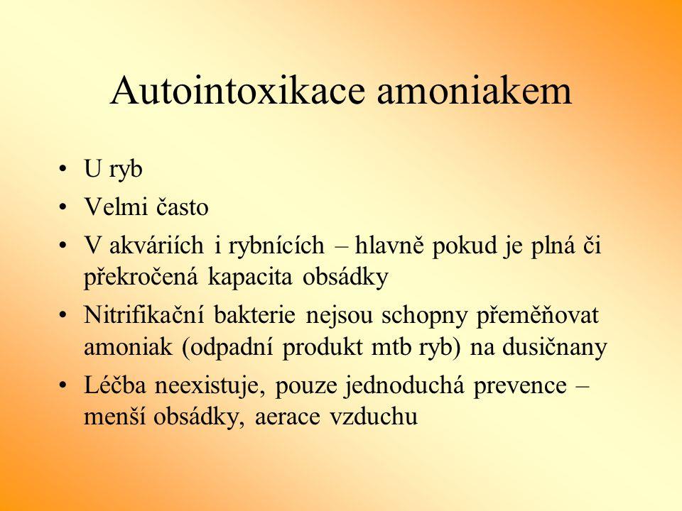 Autointoxikace amoniakem U ryb Velmi často V akváriích i rybnících – hlavně pokud je plná či překročená kapacita obsádky Nitrifikační bakterie nejsou schopny přeměňovat amoniak (odpadní produkt mtb ryb) na dusičnany Léčba neexistuje, pouze jednoduchá prevence – menší obsádky, aerace vzduchu