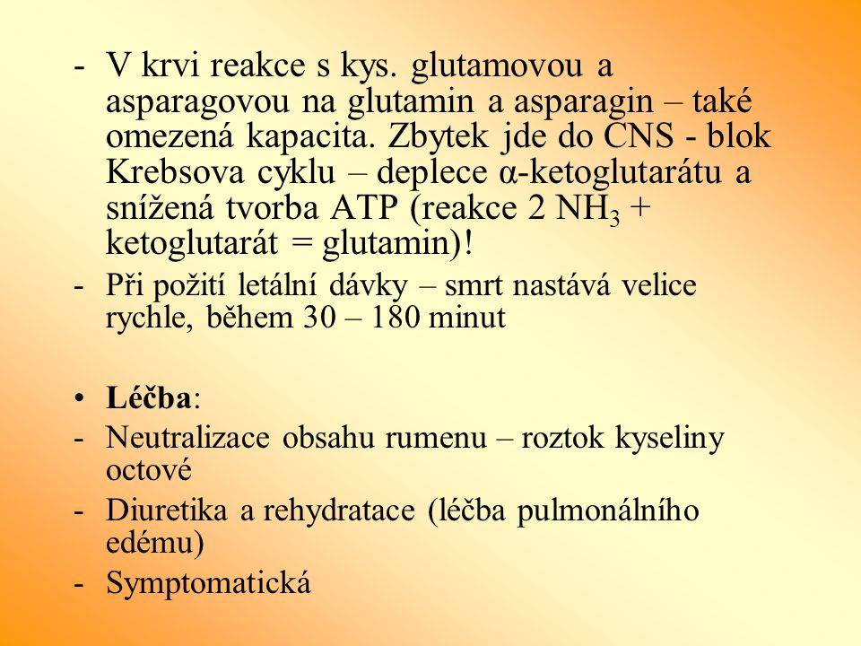 -V krvi reakce s kys. glutamovou a asparagovou na glutamin a asparagin – také omezená kapacita. Zbytek jde do CNS - blok Krebsova cyklu – deplece α-ke