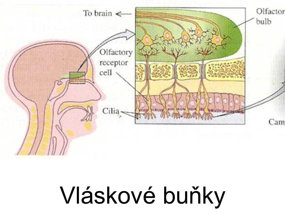 Odstup zrakového nervu – slepá skvrna