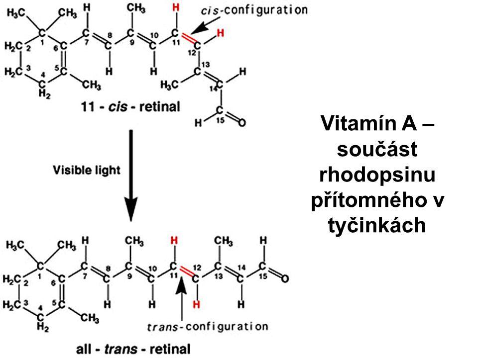 Vitamín A – součást rhodopsinu přítomného v tyčinkách