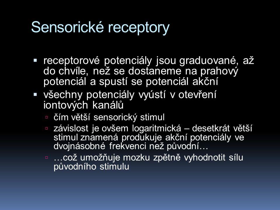 Sensorické receptory  receptorové potenciály jsou graduované, až do chvíle, než se dostaneme na prahový potenciál a spustí se potenciál akční  všechny potenciály vyústí v otevření iontových kanálů  čím větší sensorický stimul  závislost je ovšem logaritmická – desetkrát větší stimul znamená produkuje akční potenciály ve dvojnásobné frekvenci než původní…  …což umožňuje mozku zpětně vyhodnotit sílu původního stimulu