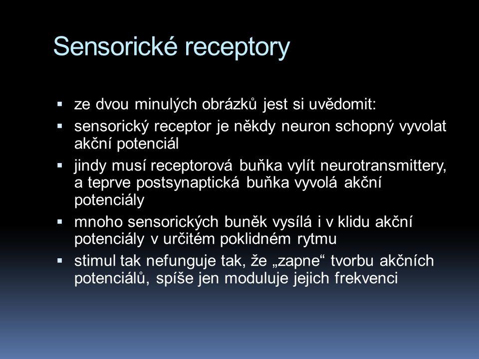 """Sensorické receptory  ze dvou minulých obrázků jest si uvědomit:  sensorický receptor je někdy neuron schopný vyvolat akční potenciál  jindy musí receptorová buňka vylít neurotransmittery, a teprve postsynaptická buňka vyvolá akční potenciály  mnoho sensorických buněk vysílá i v klidu akční potenciály v určitém poklidném rytmu  stimul tak nefunguje tak, že """"zapne tvorbu akčních potenciálů, spíše jen moduluje jejich frekvenci"""