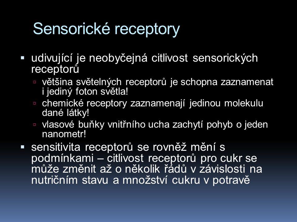 Sensorické receptory  udivující je neobyčejná citlivost sensorických receptorů  většina světelných receptorů je schopna zaznamenat i jediný foton sv