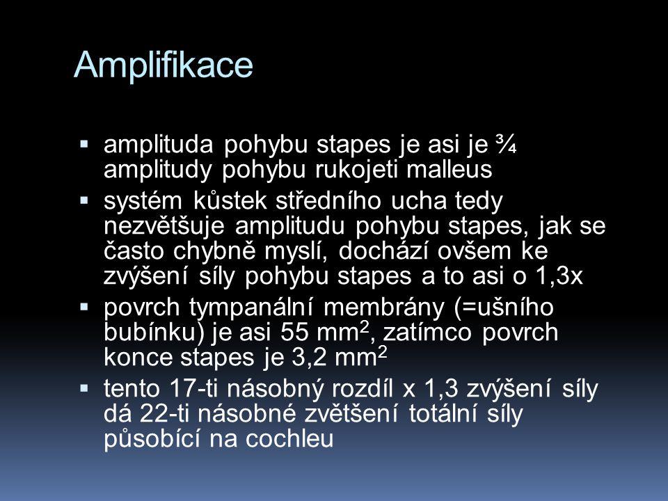 Amplifikace  amplituda pohybu stapes je asi je ¾ amplitudy pohybu rukojeti malleus  systém kůstek středního ucha tedy nezvětšuje amplitudu pohybu st