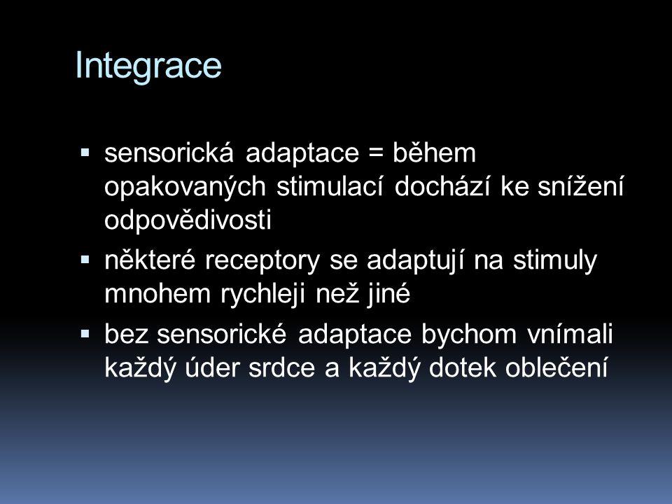 Integrace  sensorická adaptace = během opakovaných stimulací dochází ke snížení odpovědivosti  některé receptory se adaptují na stimuly mnohem rychl