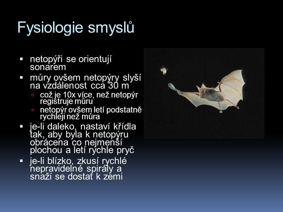 Fysiologie smyslů  netopýři se orientují sonarem  můry ovšem netopýry slyší na vzdálenost cca 30 m  což je 10x více, než netopýr registruje můru  netopýr ovšem letí podstatně rychleji než můra  je-li daleko, nastaví křídla tak, aby byla k netopýru obrácena co nejmenší plochou a letí rychle pryč  je-li blízko, zkusí rychlé nepravidelné spirály a snaží se dostat k zemi