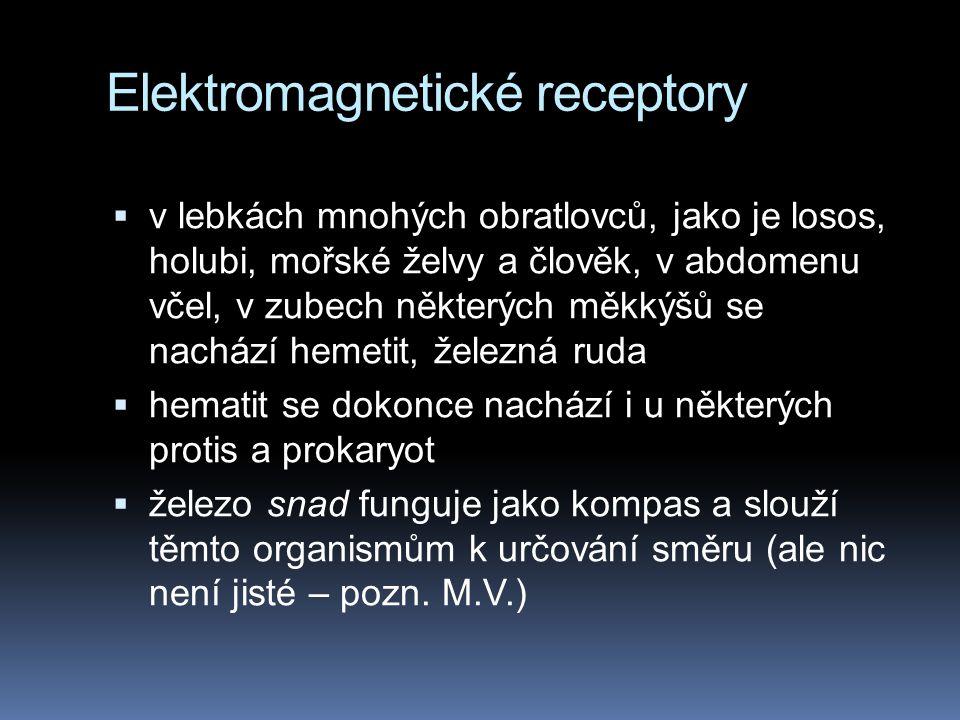 Elektromagnetické receptory  v lebkách mnohých obratlovců, jako je losos, holubi, mořské želvy a člověk, v abdomenu včel, v zubech některých měkkýšů