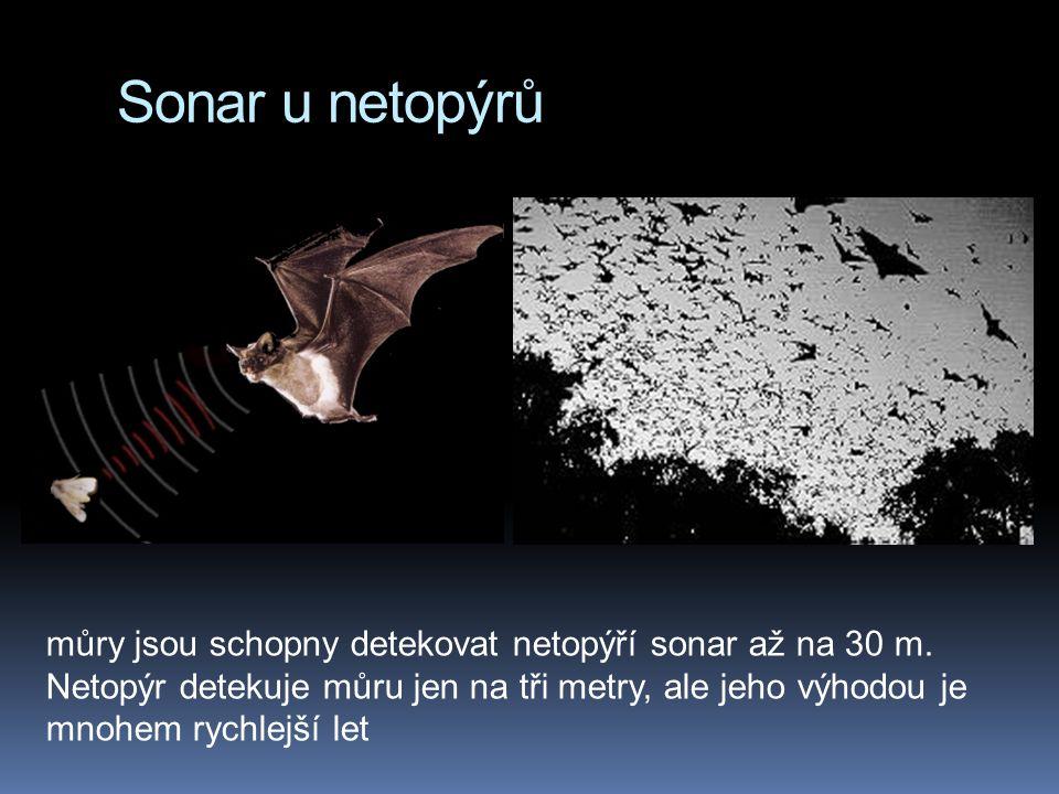 Sonar u netopýrů můry jsou schopny detekovat netopýří sonar až na 30 m. Netopýr detekuje můru jen na tři metry, ale jeho výhodou je mnohem rychlejší l