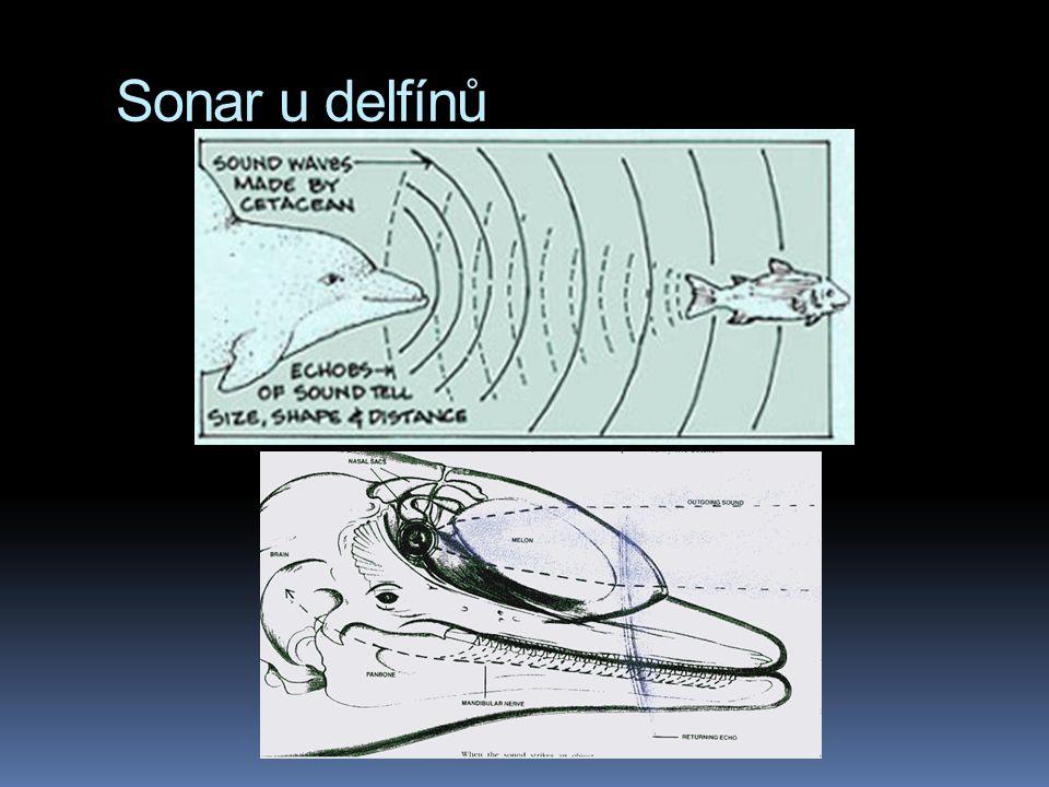  člověk slyší zvuky v rozmezí 20 – 20 000 Hz  pes až do 40 000 Hz  netopýr až 100 000 Hz