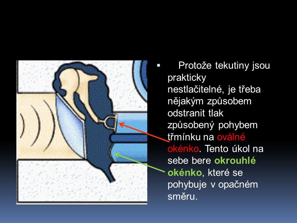  Protože tekutiny jsou prakticky nestlačitelné, je třeba nějakým způsobem odstranit tlak způsobený pohybem třmínku na oválné okénko. Tento úkol na se