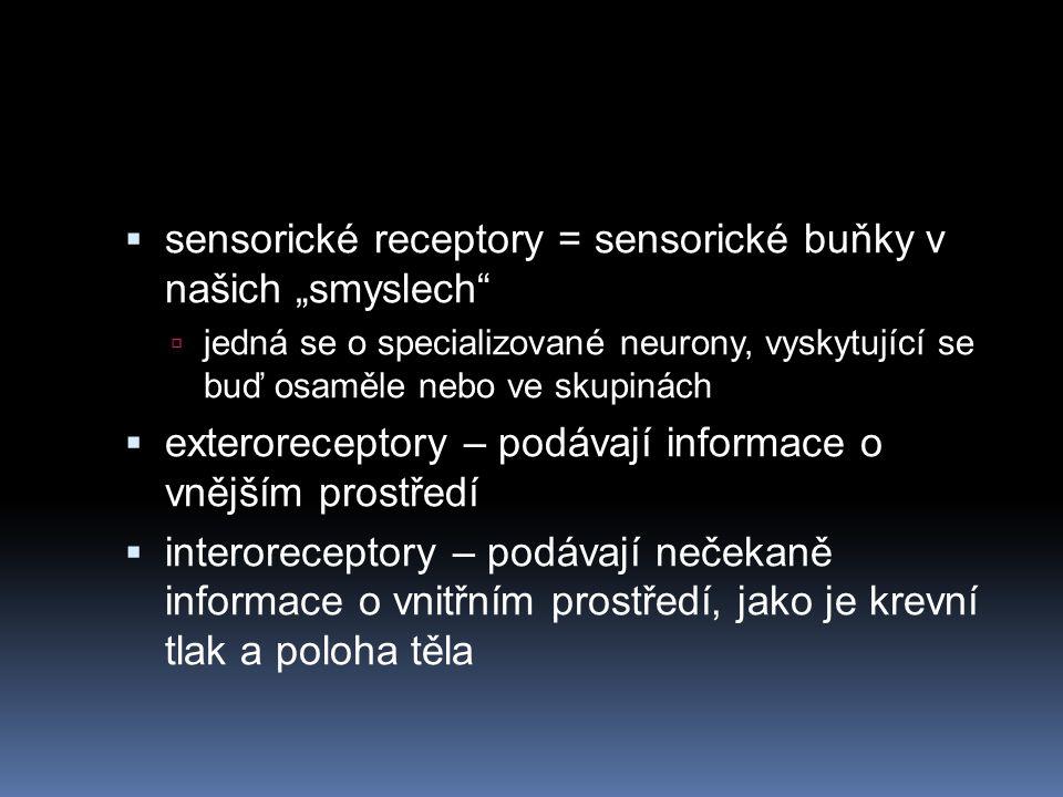 """ sensorické receptory = sensorické buňky v našich """"smyslech""""  jedná se o specializované neurony, vyskytující se buď osaměle nebo ve skupinách  exte"""