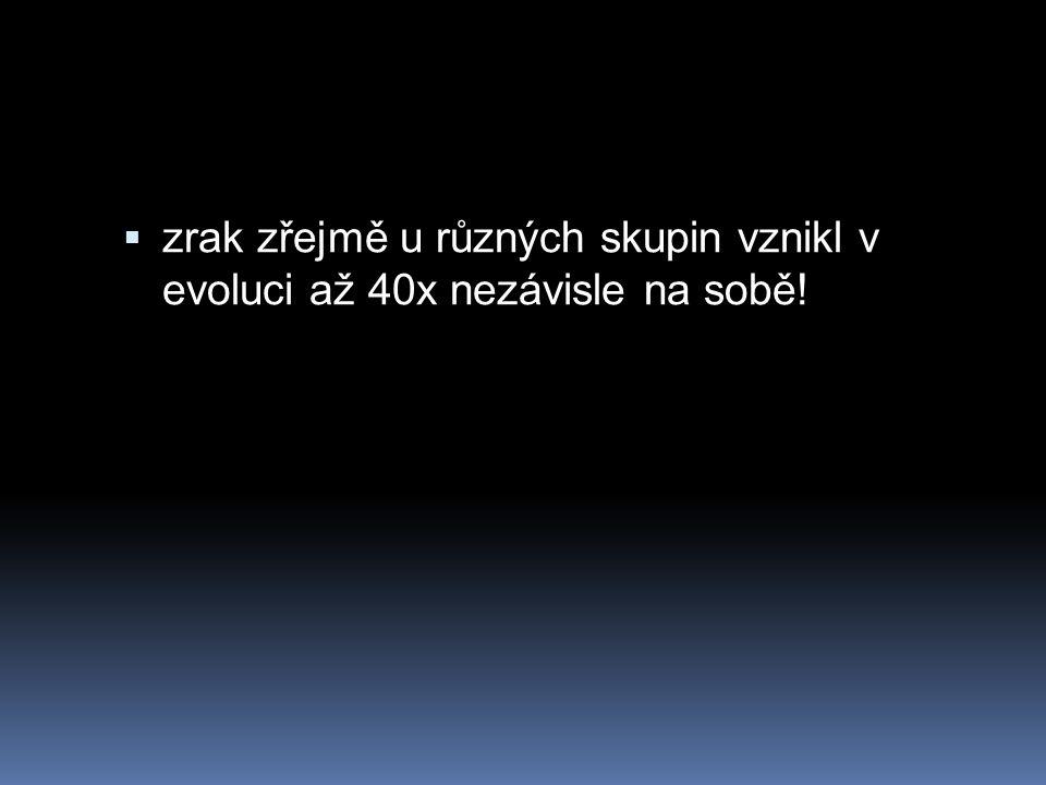  zrak zřejmě u různých skupin vznikl v evoluci až 40x nezávisle na sobě!