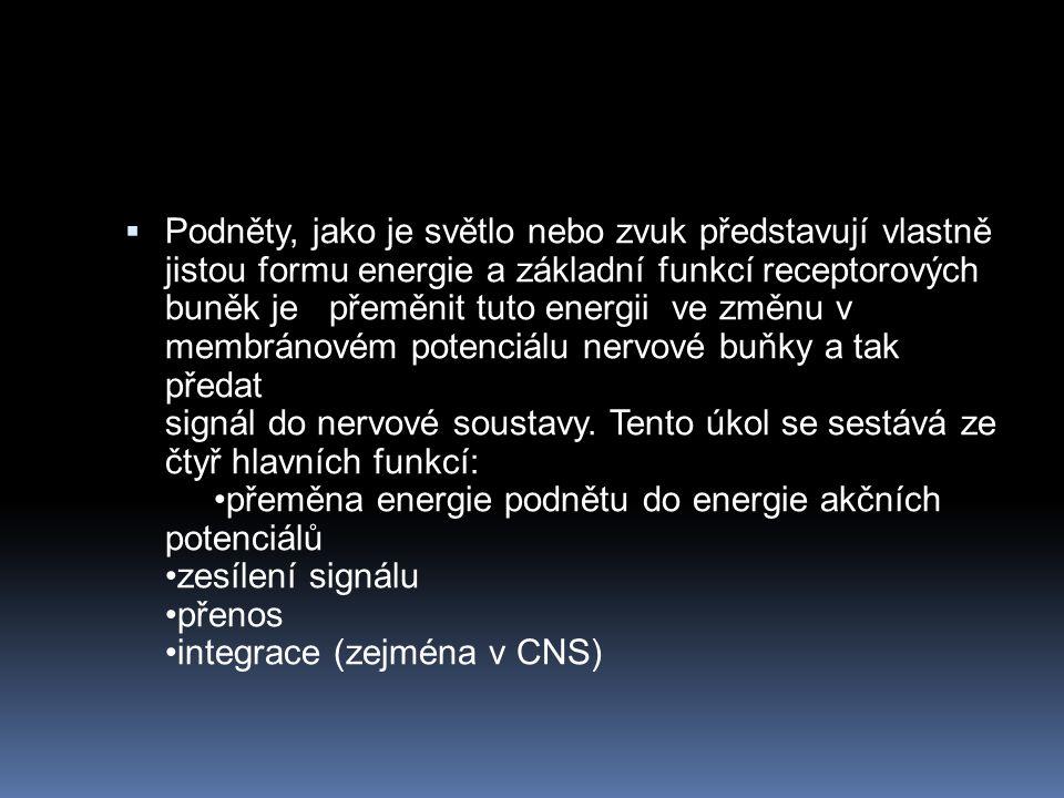 Podněty, jako je světlo nebo zvuk představují vlastně jistou formu energie a základní funkcí receptorových buněk je přeměnit tuto energii ve změnu v