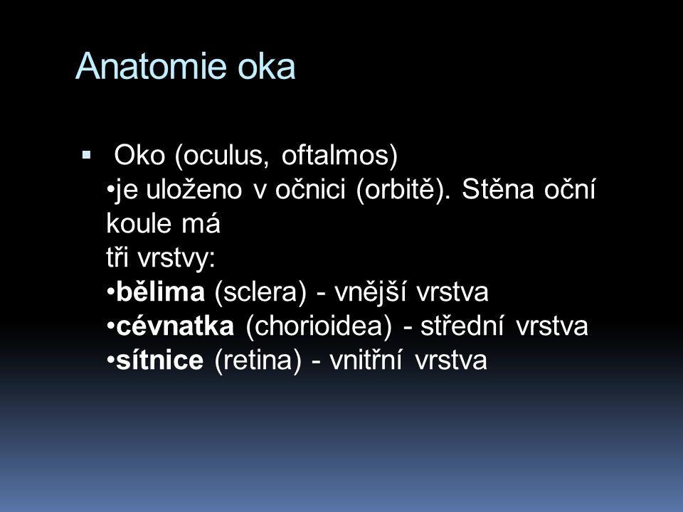 Anatomie oka  Oko (oculus, oftalmos) je uloženo v očnici (orbitě).