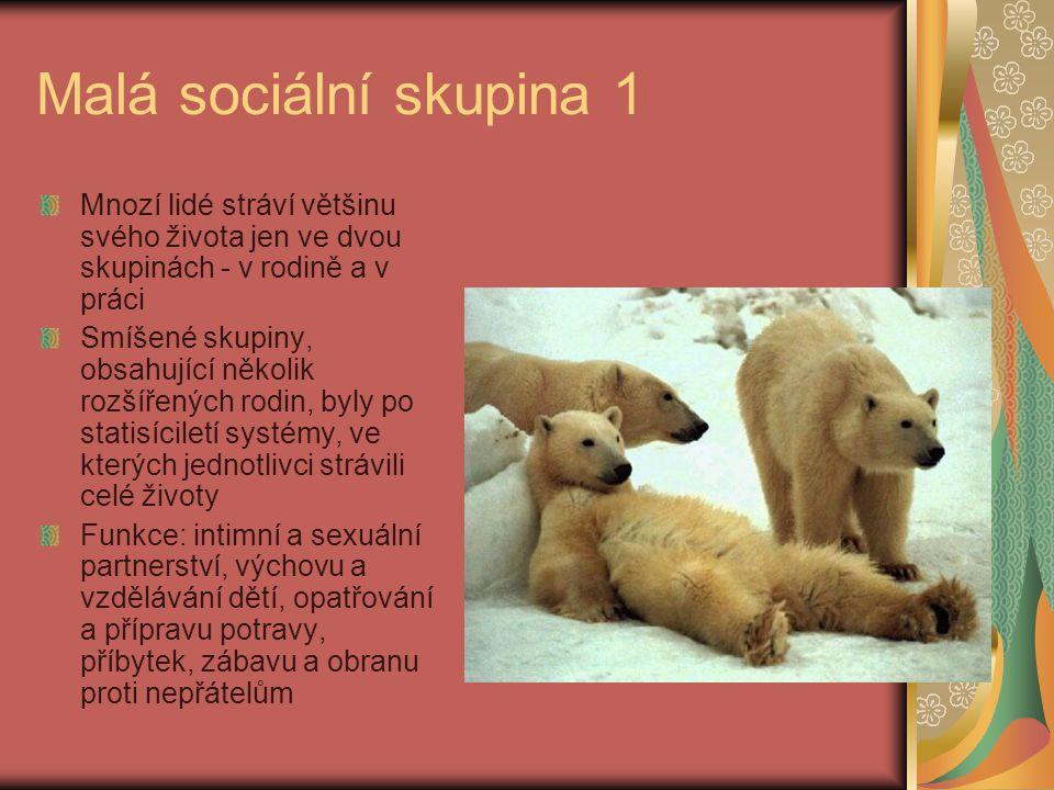 Malá sociální skupina 1 Mnozí lidé stráví většinu svého života jen ve dvou skupinách - v rodině a v práci Smíšené skupiny, obsahující několik rozšířen