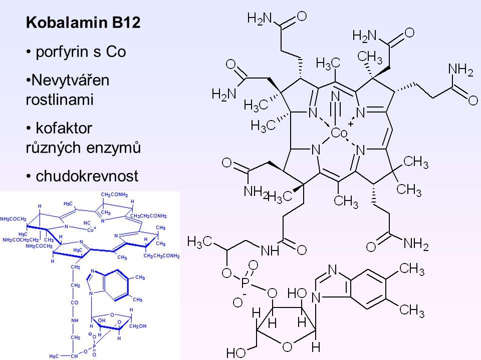 Kobalamin B12 porfyrin s Co Nevytvářen rostlinami kofaktor různých enzymů chudokrevnost