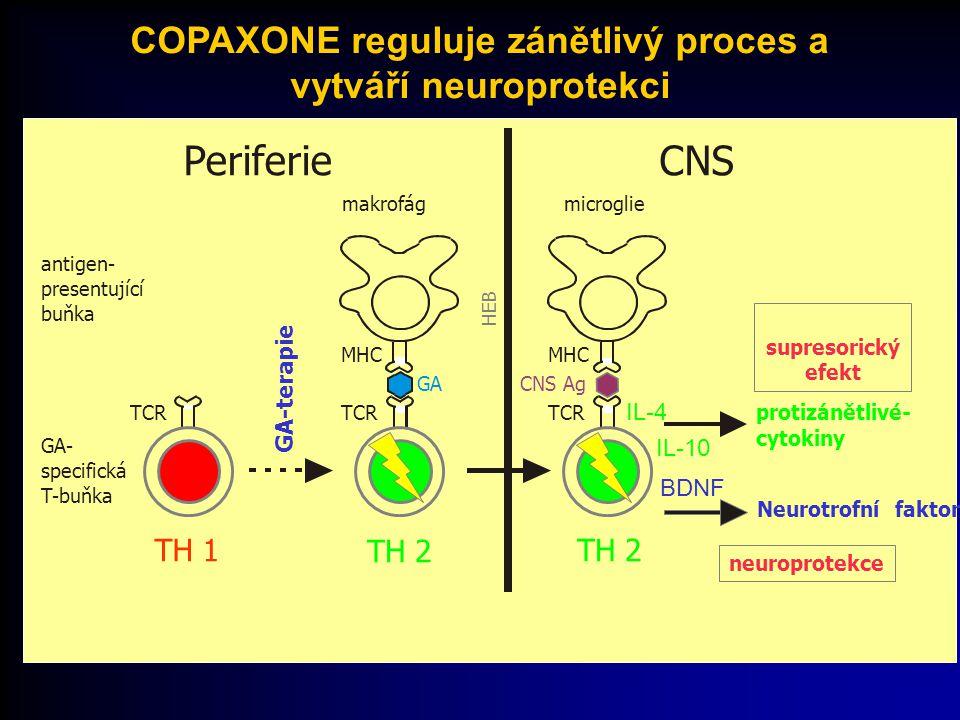 PeriferieCNS HEB TCR GA- specifická T-buňka TH 1 MHC TCR antigen- presentující buňka makrofág TH 2 GA GA-terapie Neurotrofní faktor neuroprotekce BDNF