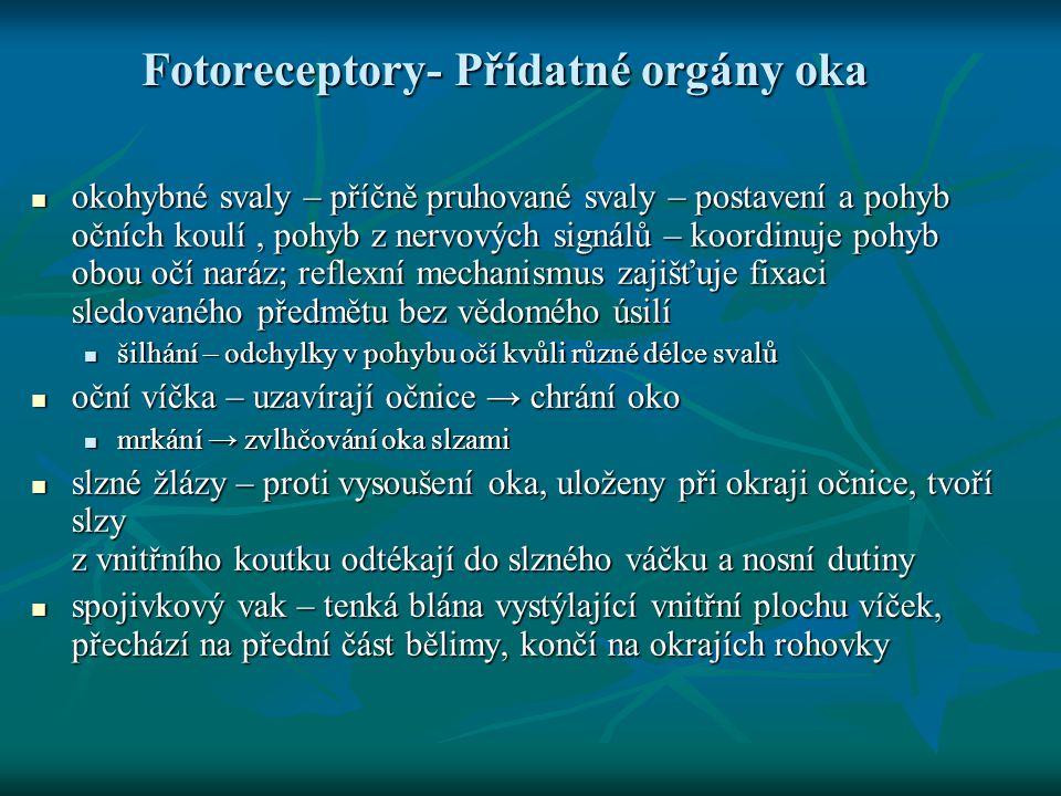 Fotoreceptory- Přídatné orgány oka okohybné svaly – příčně pruhované svaly – postavení a pohyb očních koulí, pohyb z nervových signálů – koordinuje po