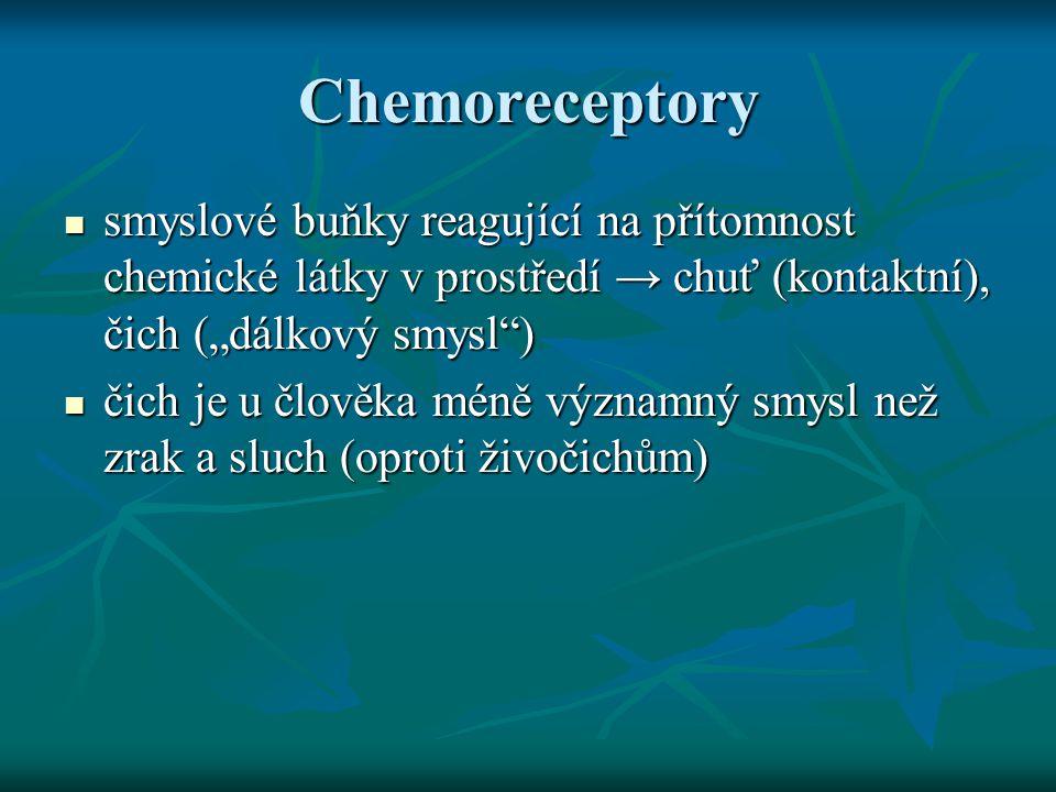 """Chemoreceptory smyslové buňky reagující na přítomnost chemické látky v prostředí → chuť (kontaktní), čich (""""dálkový smysl"""") smyslové buňky reagující n"""