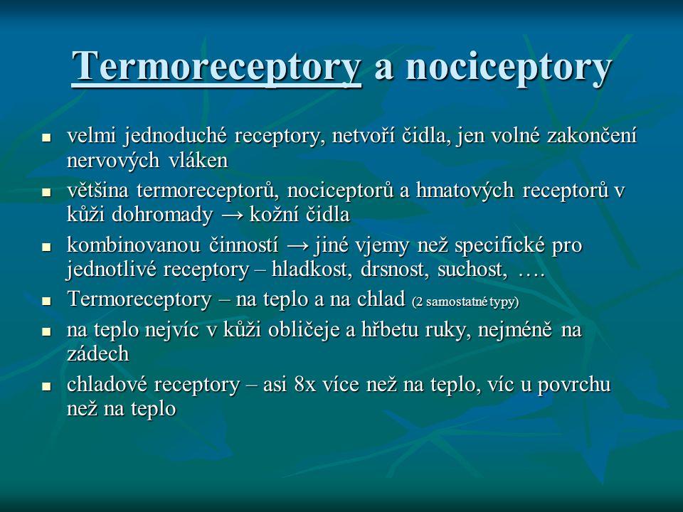 Termoreceptory a nociceptory velmi jednoduché receptory, netvoří čidla, jen volné zakončení nervových vláken velmi jednoduché receptory, netvoří čidla
