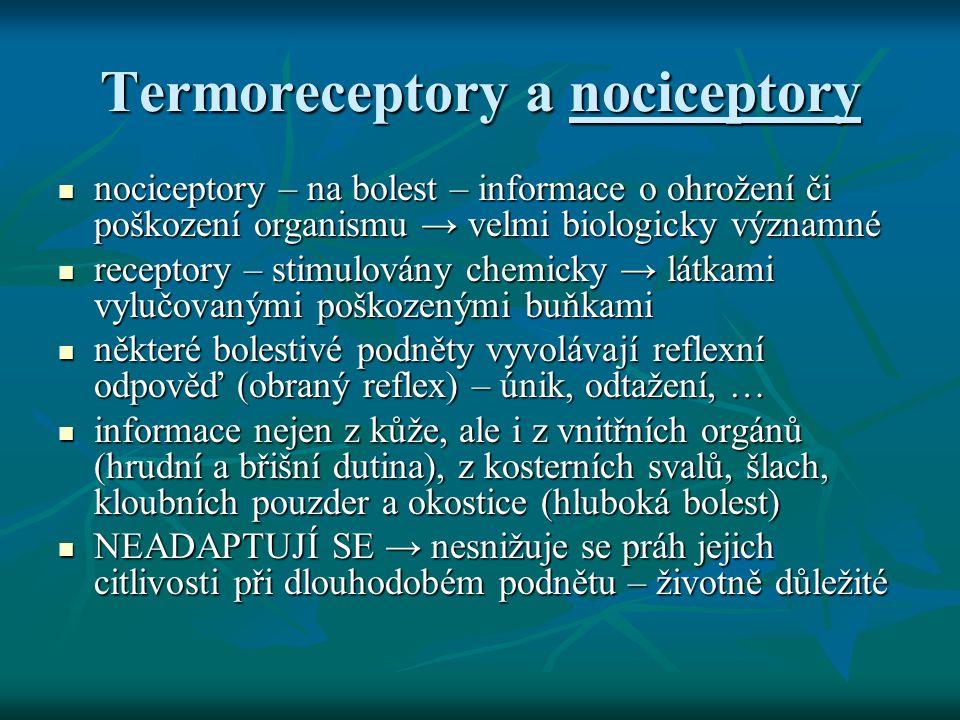 Termoreceptory a nociceptory nociceptory – na bolest – informace o ohrožení či poškození organismu → velmi biologicky významné nociceptory – na bolest
