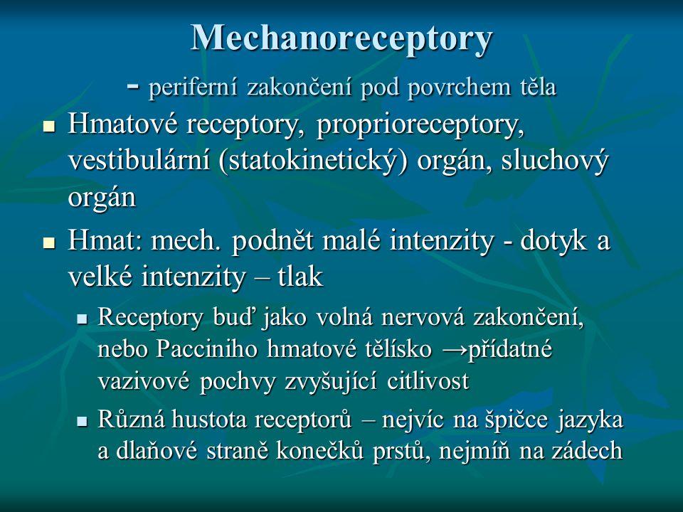 Mechanoreceptory Proprioreceptory – receptory zaznamenávající natažení svalů a šlach Proprioreceptory – receptory zaznamenávající natažení svalů a šlach šlachová tělíska a svalová vřeténka šlachová tělíska a svalová vřeténka napětí svalu, informace o činnosti svalstva pro lokomoci, vzpřímený postoj a jinou koordinovanou činnost napětí svalu, informace o činnosti svalstva pro lokomoci, vzpřímený postoj a jinou koordinovanou činnost