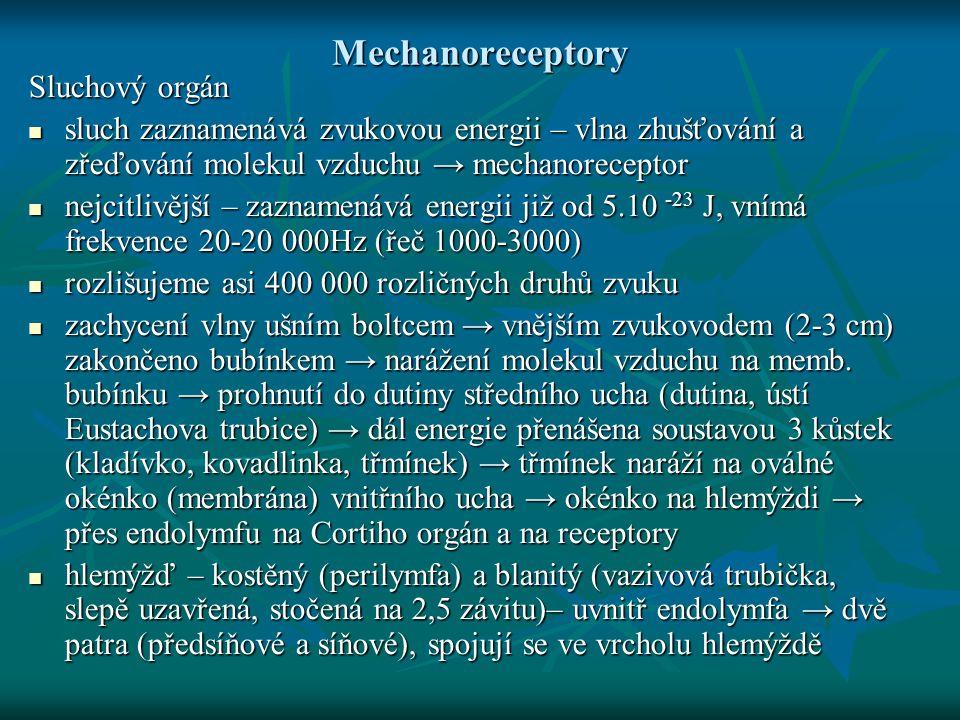 Sluchový orgán Cortiho orgán: na bazální membráně dolní stěny usazeny sluchové receptory – vláskové buňky → různě dlouhé vlásky – vlásky dotyk s krycí membránou Cortiho orgán: na bazální membráně dolní stěny usazeny sluchové receptory – vláskové buňky → různě dlouhé vlásky – vlásky dotyk s krycí membránou zvukové vlny pomocí úderů třmínku na oválné okénko rozechvějí perilymfu, v ní blanitý hlemýžď → přenos vlnění na endolymfu → kmity endolymfy → posun krycí memb.