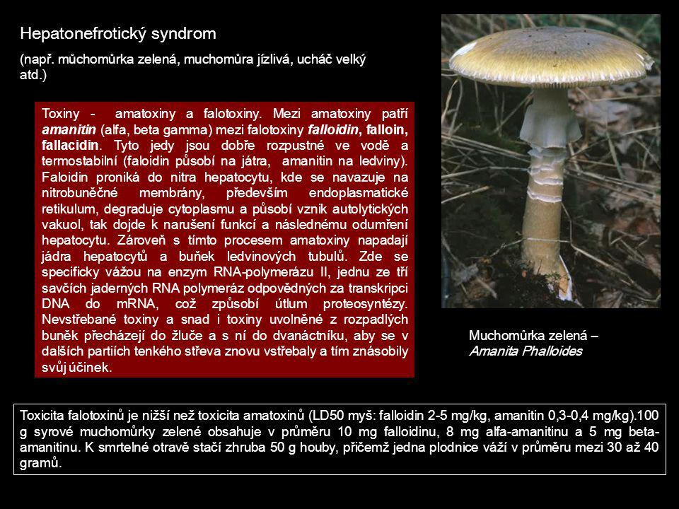 Hepatonefrotický syndrom (např. můchomůrka zelená, muchomůra jízlivá, ucháč velký atd.) Muchomůrka zelená – Amanita Phalloides Toxiny - amatoxiny a fa