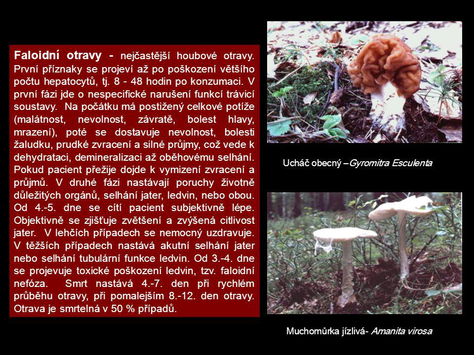 Ucháč obecný –Gyromitra Esculenta Muchomůrka jízlivá- Amanita virosa Faloidní otravy - nejčastější houbové otravy. První příznaky se projeví až po poš