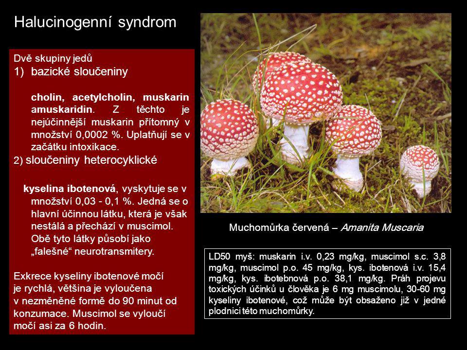 Halucinogenní syndrom Muchomůrka červená – Amanita Muscaria Dvě skupiny jedů 1)bazické sloučeniny cholin, acetylcholin, muskarin amuskaridin. Z těchto