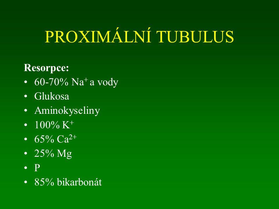 PROXIMÁLNÍ TUBULUS Resorpce: 60-70% Na + a vody Glukosa Aminokyseliny 100% K + 65% Ca 2+ 25% Mg P 85% bikarbonát