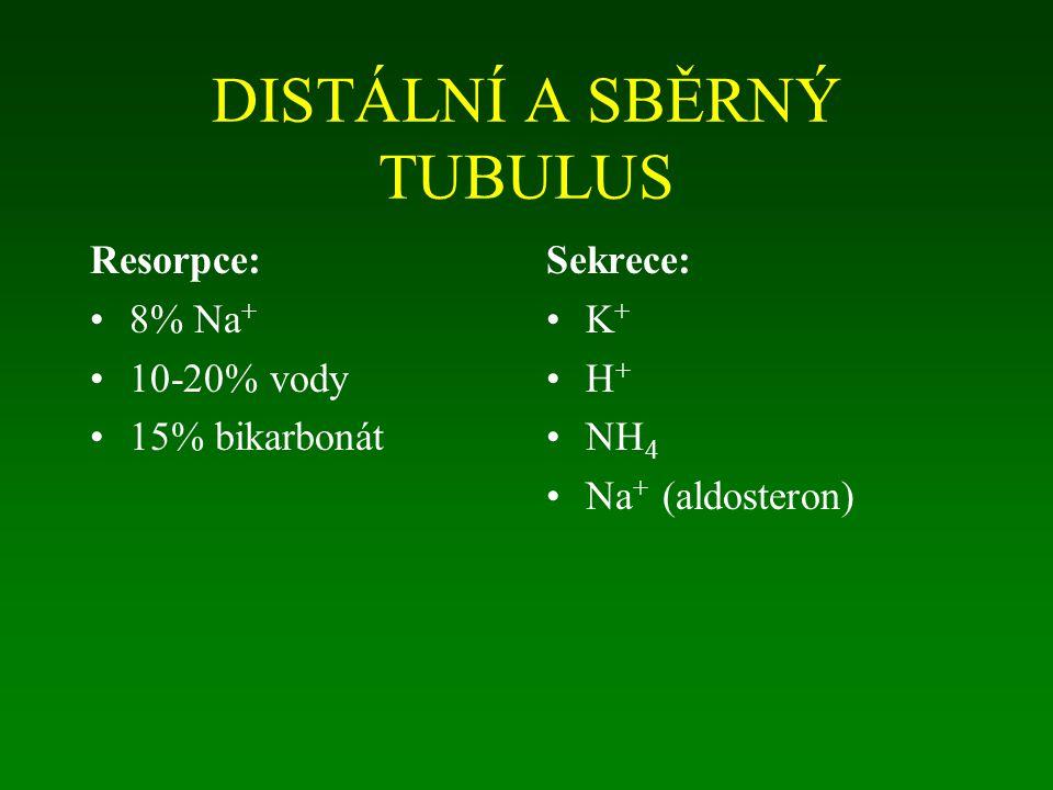 DISTÁLNÍ A SBĚRNÝ TUBULUS Resorpce: 8% Na + 10-20% vody 15% bikarbonát Sekrece: K + H + NH 4 Na + (aldosteron)