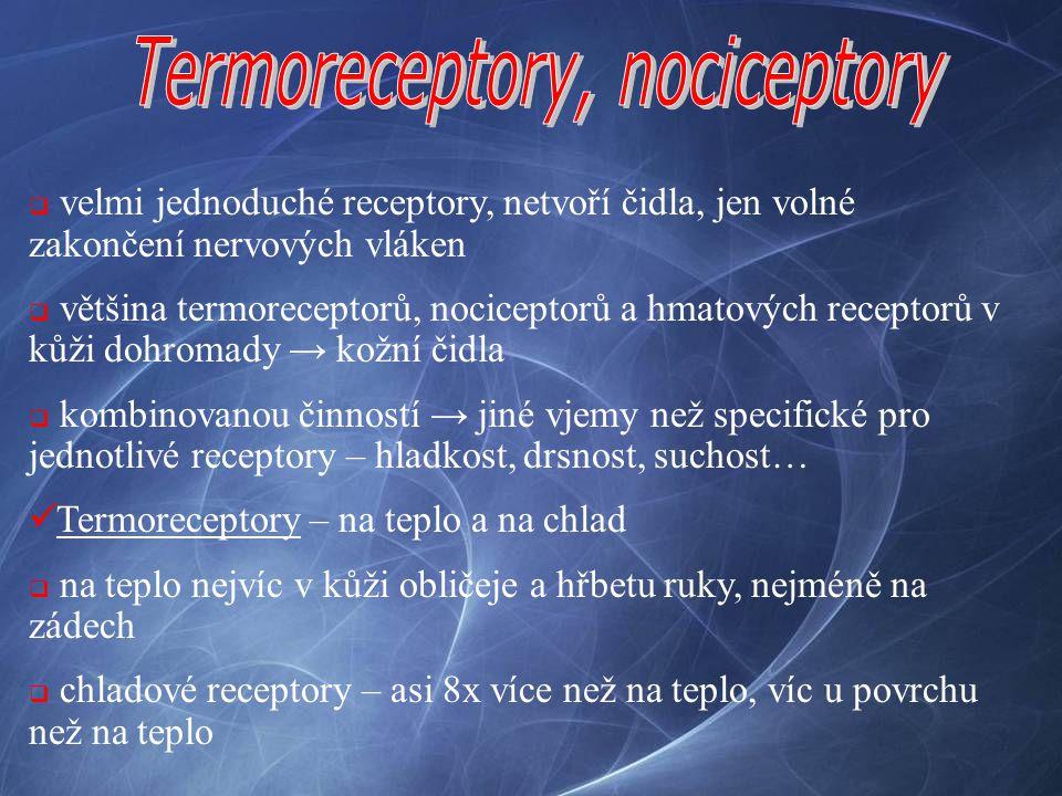  velmi jednoduché receptory, netvoří čidla, jen volné zakončení nervových vláken  většina termoreceptorů, nociceptorů a hmatových receptorů v kůži d