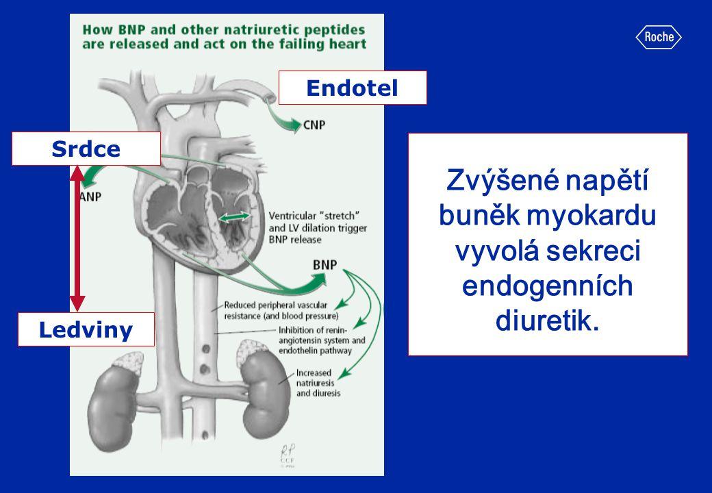 Zvýšené napětí buněk myokardu vyvolá sekreci endogenních diuretik. Srdce Ledviny Endotel